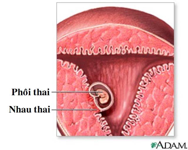 boc-tach-tui-thai